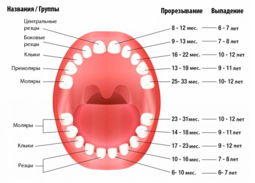 Процесс появления коренных зубов у ребенка